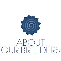 About Welsh Terrier Breeder
