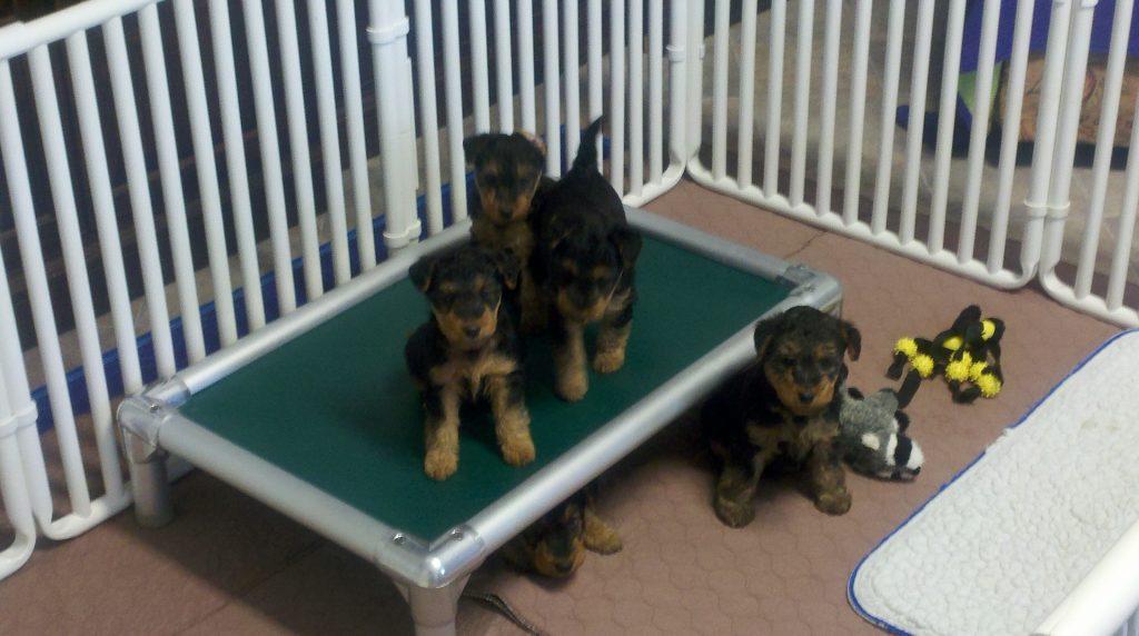 Pups 7-4-12 FXS