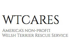 Welsh Terrier CARES