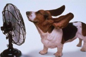 Heatstroke can Kill – Keep Cool!