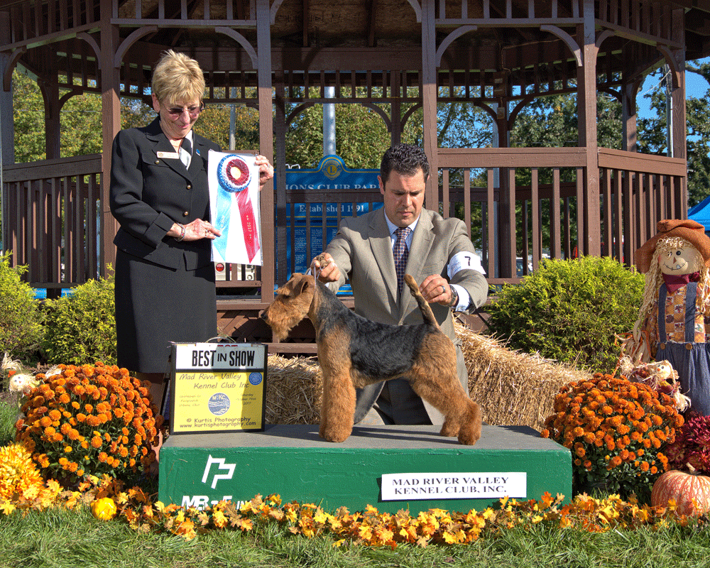 Welsh Terrier Best in Show