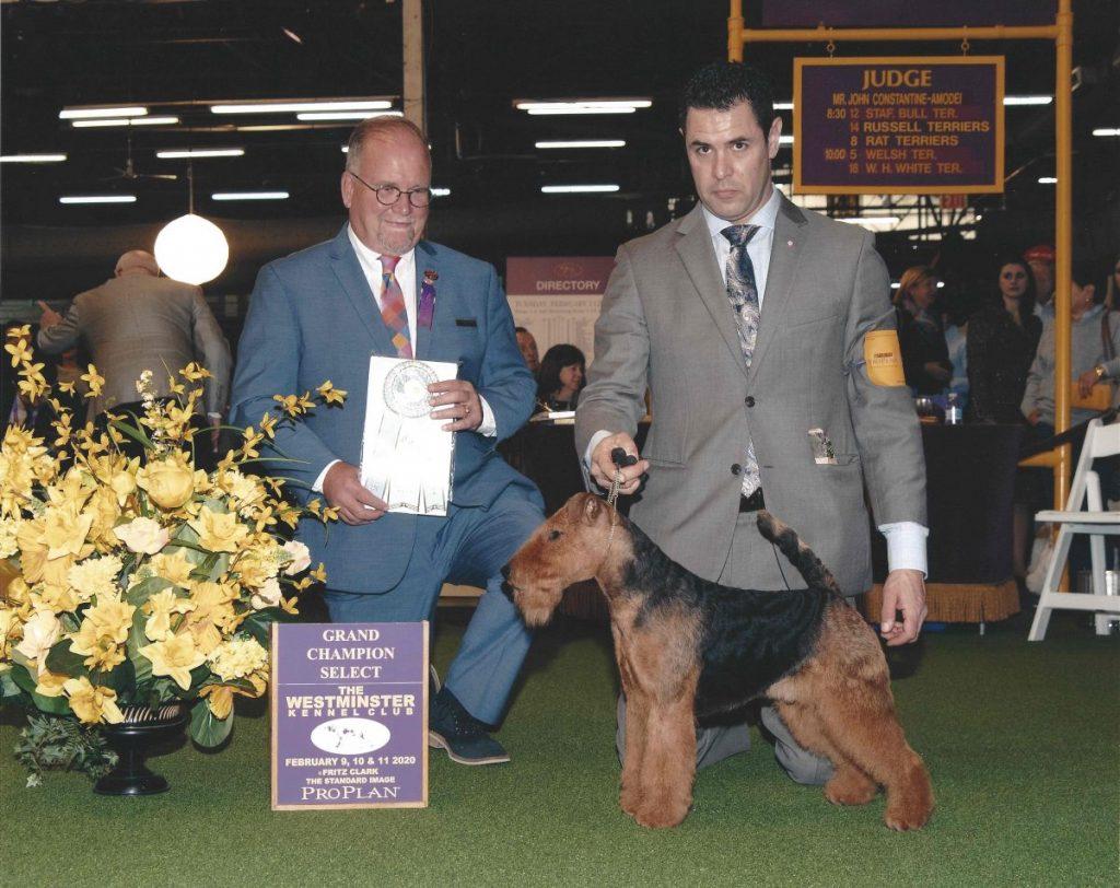 GCh Abbeyrose Captain Morgan 2-10-20 WKC Select Dog Judge Mr. John Constantine-Amodei