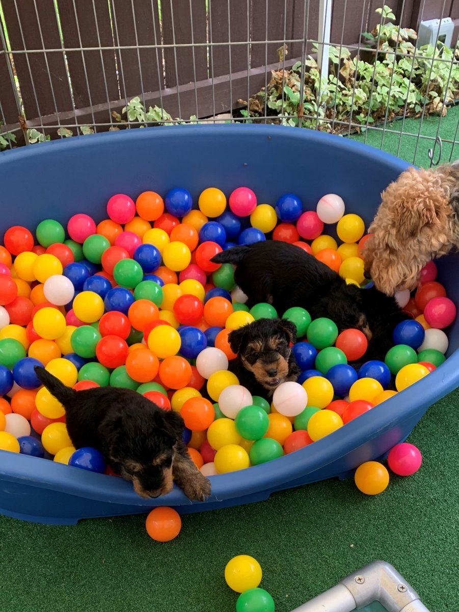 Puppies 8-18-20